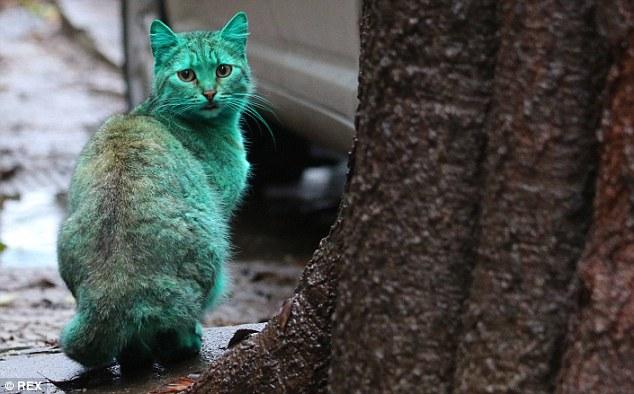 colorfulcat4