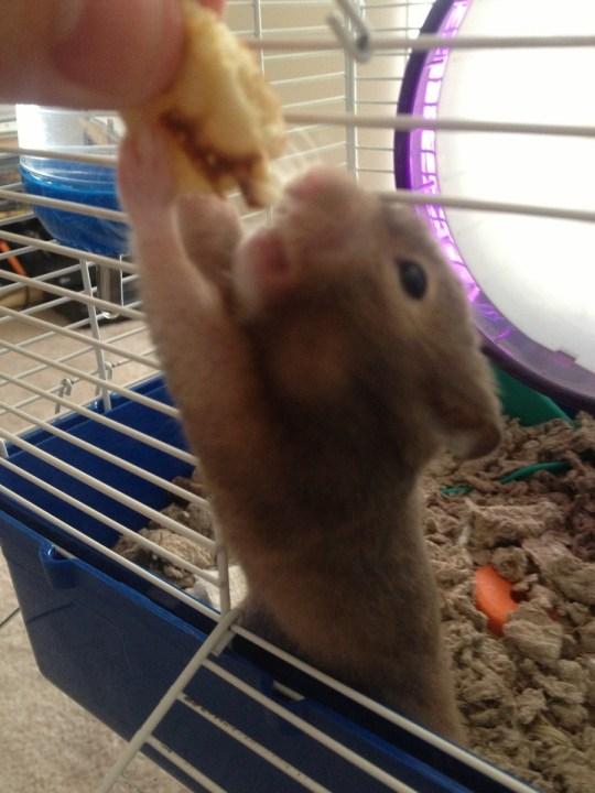 hamster_cute (11)
