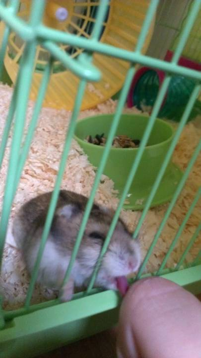 hamster_cute (16)