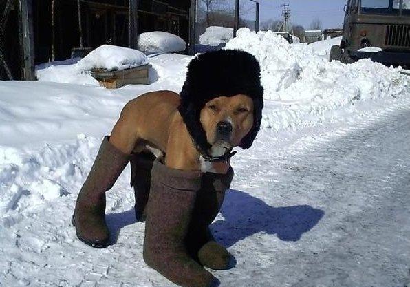 heater_animal (5)