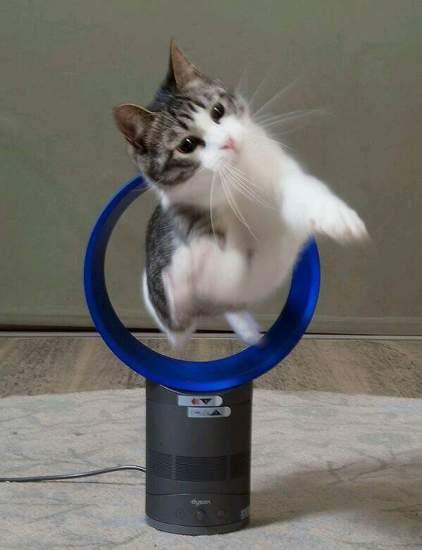 cat_happen (5)