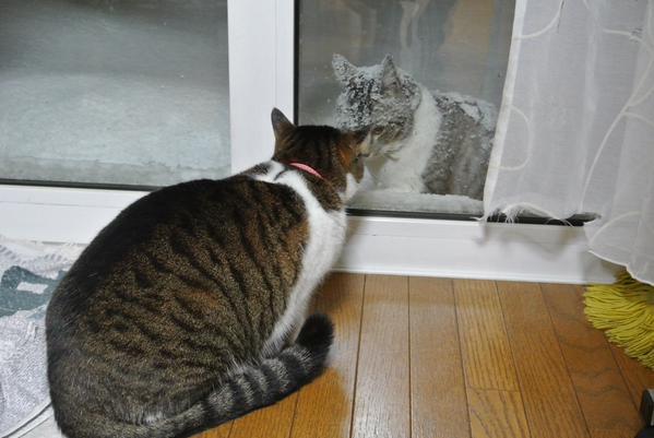 snowcat (2)