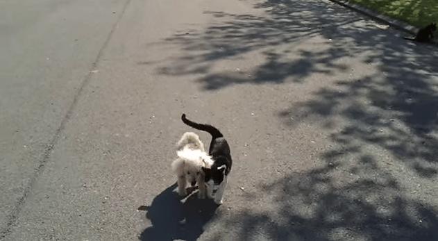 cat_dog2