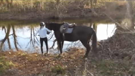 horse_river2