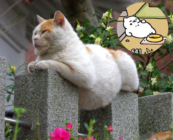 cat_saikyo (12)