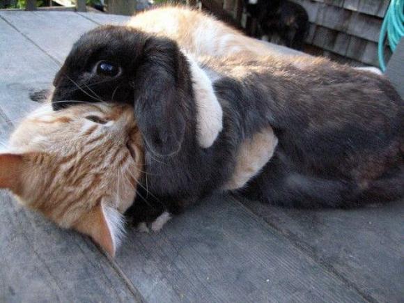 bunny10