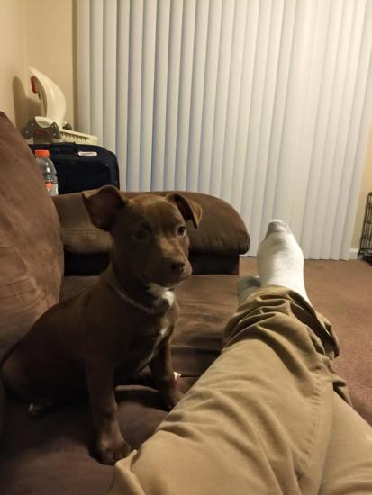 speakabledog (16)