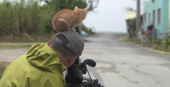 cameraman_animal (1)