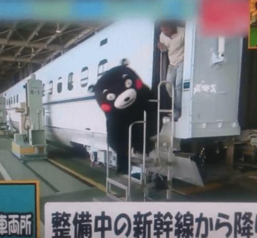 kumamon_jiko1