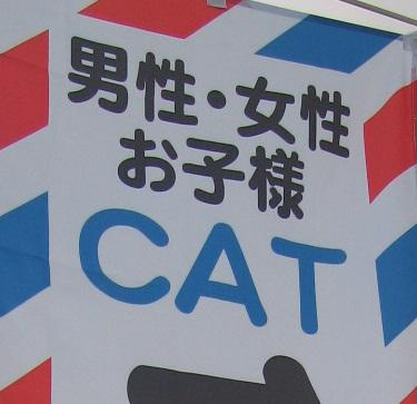 tokoya_cat (2)