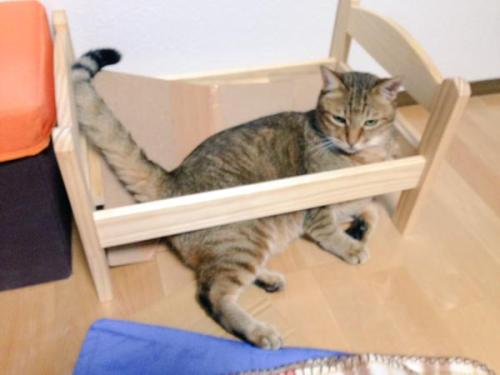 catbed2