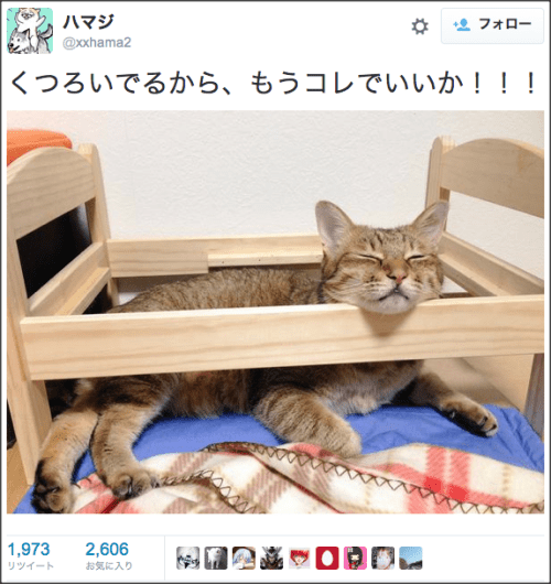 catbedcapture2
