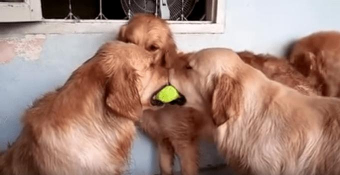 dogball_three1