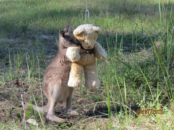 kangaroo_jooy (2)