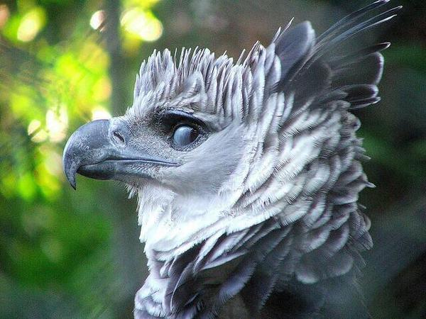 partybird2