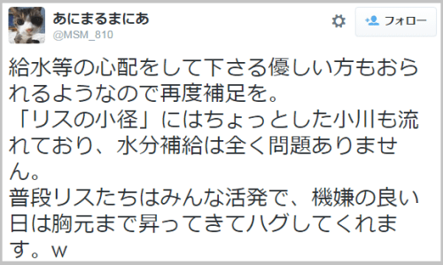 risu_becool (3)