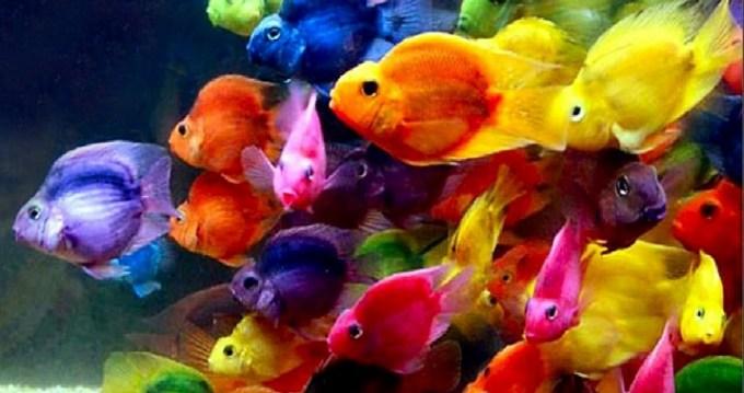 beautiful-fish