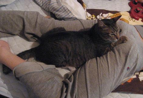 catbed_legs (5)