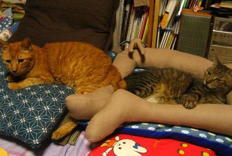 catbed_legs (7)