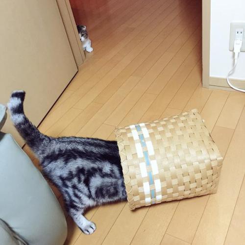 catbrother (1)