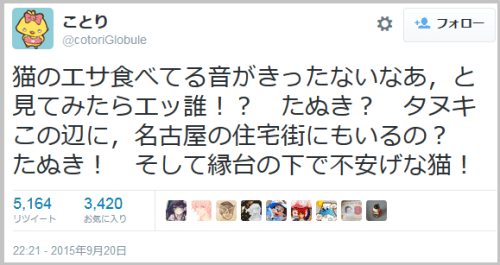 tanuki_cat1