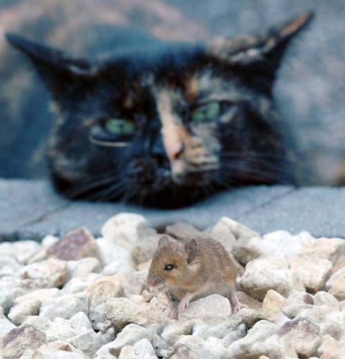 1005catmouse8