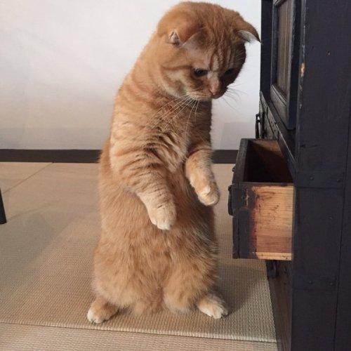 1024kyoto_cat3