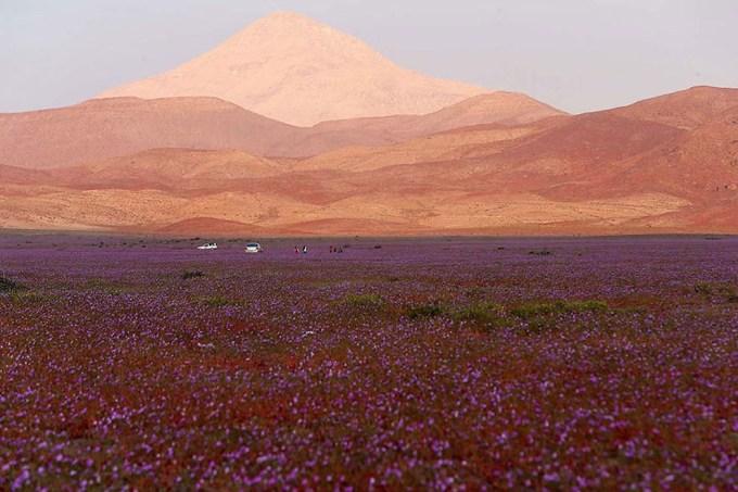 1115atacama_desert3