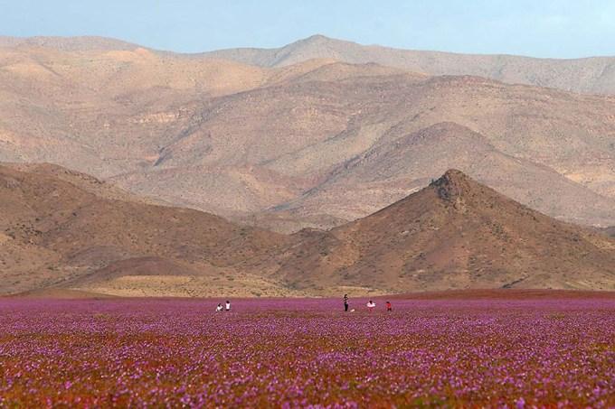 1115atacama_desert7