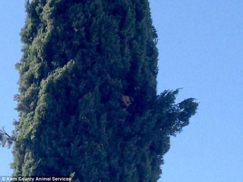 1118dog_tree5