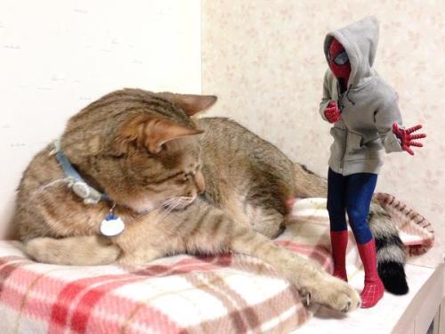1124cat_spiderman18