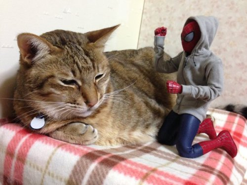 1124cat_spiderman3