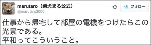1130maru_shiba_dog12