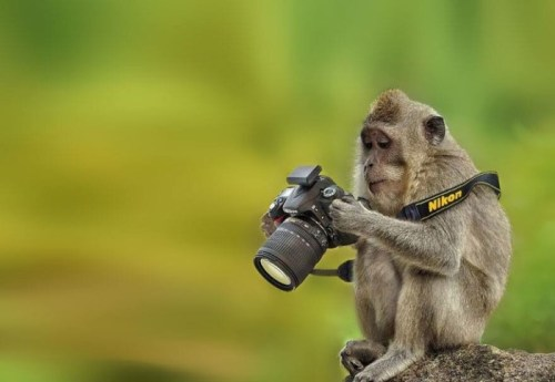 5animal_camera
