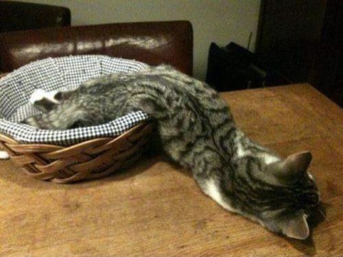cat_liquid3