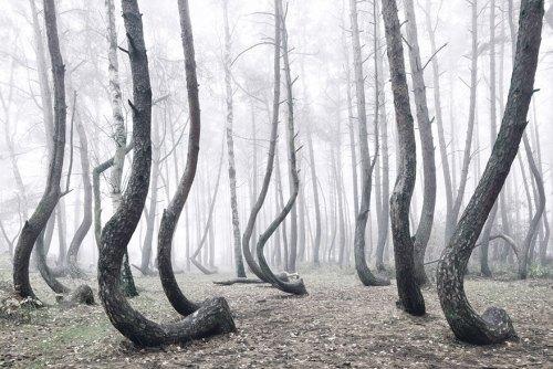 crooked_tree3