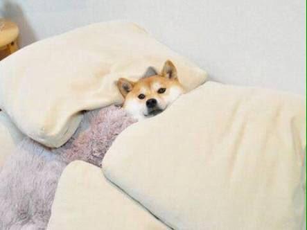 dog_sleep2