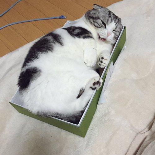 1211akubi_cat8