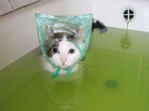 bathcats (3)