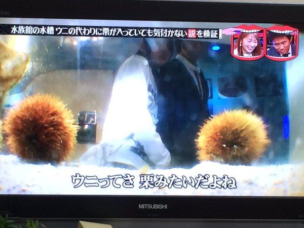 uni_kuri (4)