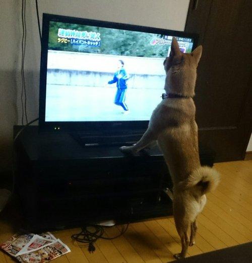 0101dog_rannyu5