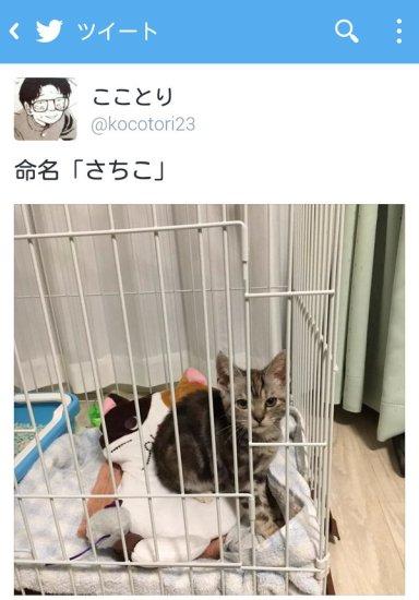 newlife_cat (2)