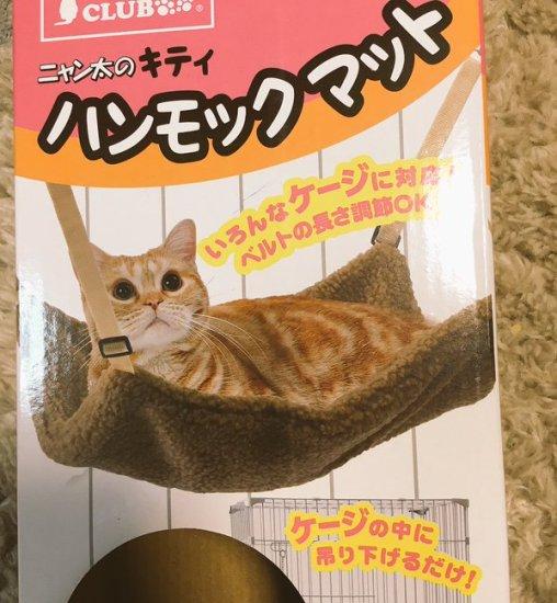 h_cat (1)