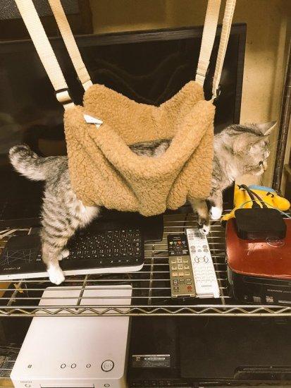 h_cat (2)