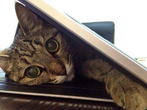 happycat (2)