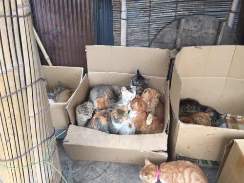 happycat (8)