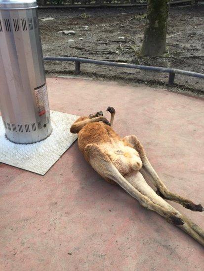 kangaroo_stove (1)