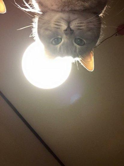 lovelycat (12)