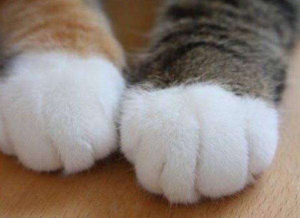 lovelycat (16)