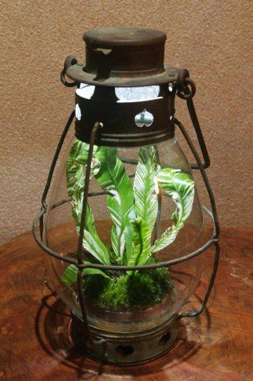 lamp_watertank13